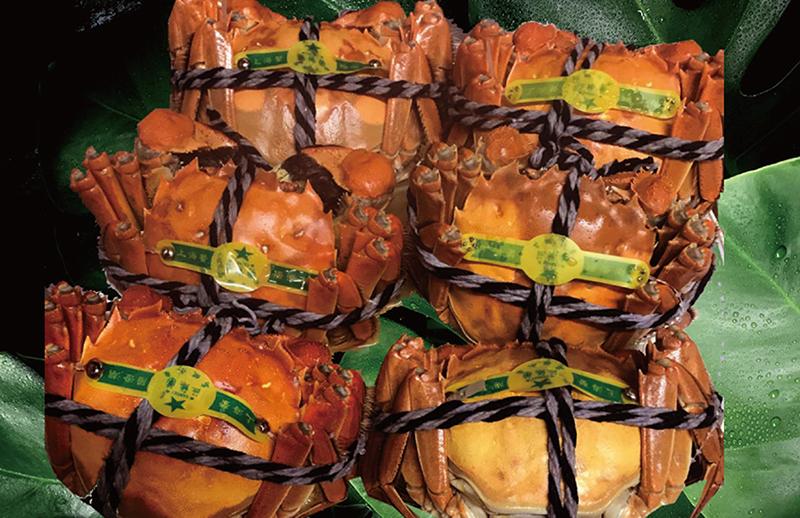 陽澄湖の上海蟹